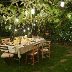 Piante sempreverdi da giardino basse: dalla siepe ideale per i giardini alle piante da vaso colorate