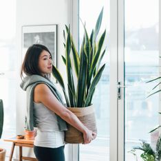 Plantes d'intérieur faciles d'entretien : comment bien les choisir et les soigner