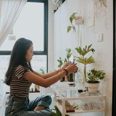 Piante da casa: le 10 migliori per decorare e purificare l'ambiente