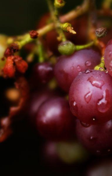 L'uva fa ingrassare: non è vero e vi spieghiamo il perché