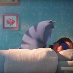 Mais pourquoi votre chat vous réveille-t-il la nuit ?