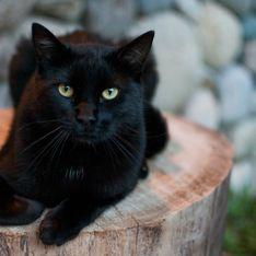 Gatto nero e superstizione: perché si dice che porti sfortuna