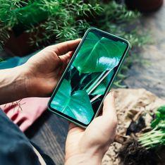 Pflanzen bestimmen: Die besten Apps und Tipps zum Identifizieren