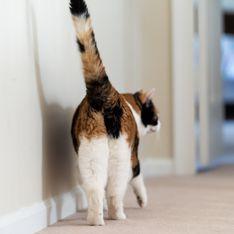 Mais pourquoi les chats aiment tant nous montrer leurs fesses ?