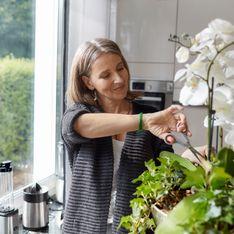 Come curare le orchidee: i nostri consigli per farle durare
