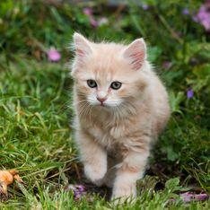 Come vedono i gatti: ai nostri occhi sono adorabili ma come è il mondo visto con i loro occhi?
