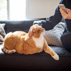 Votre chat est-il en dépression ? Cette application le prend en photo et vous répond