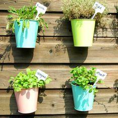 Kräuter anpflanzen: Tipps für Garten, Balkone und Wohnungen