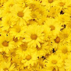 Fiori gialli: nomi e caratteristiche delle varietà più solari in natura