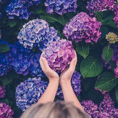 Fiori viola, le piante da esterno con tinte violacee: rampicanti, perenni, esotiche e molte altre