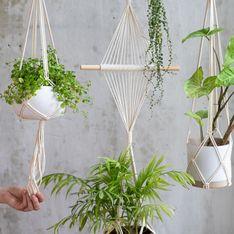 Hängepflanzen fürs Zimmer: Diese Arten sind schön und pflegeleicht