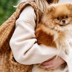 Son chien meurt dans un train non-climatisé, la SNCF lui rembourse 70€