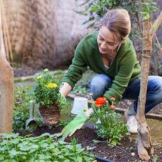 Piante infestanti: come e quando eliminarle da orto e giardino e come tenere sotto controllo quelle che sono infestanti ma anche molto gradite