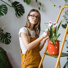 Piante ornamentali da interno: la bellezza del verde naturale o artificiale e tutte le specie di piante da vasi di varie dimensioni per il tuo appartamento