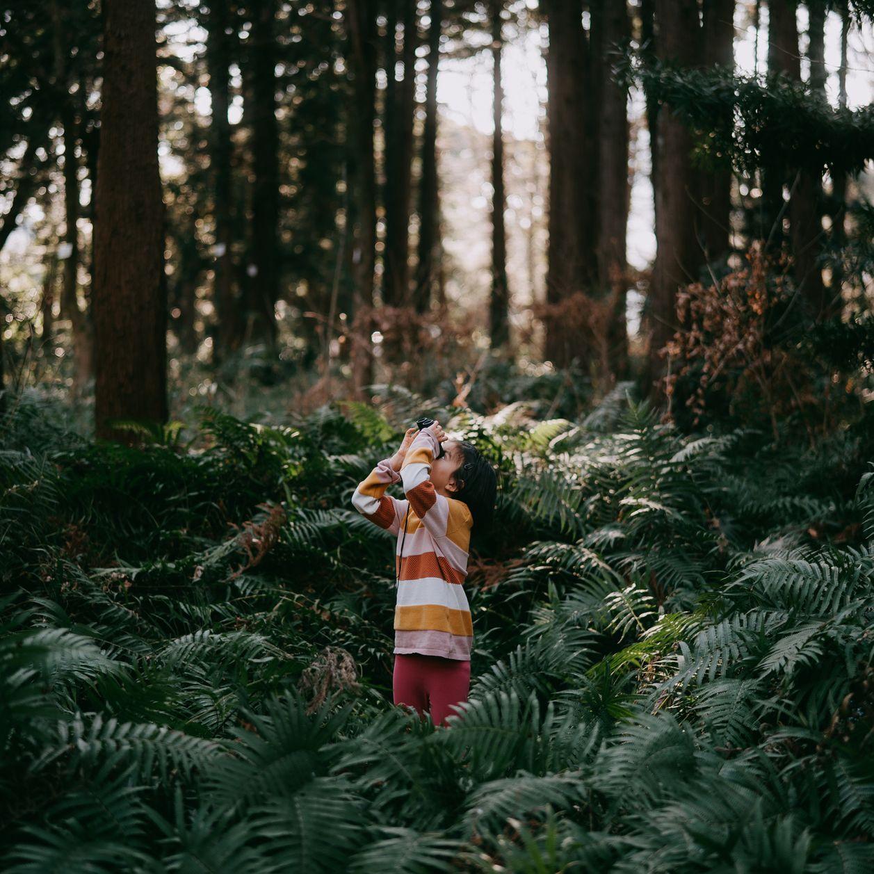 À 3 ans et atteint d'autisme un petit garçon disparaît dans la forêt