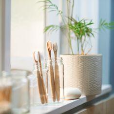 Bambù in vaso: la pianta da mettere prima di tutte nella tua lista dei desideri (portafortuna!)