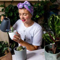 Piante succulente: quali sono le più belle e come coltivarle