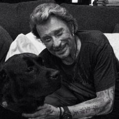 La famille Hallyday dévastée : Santos, le labrador de Johnny, est décédé