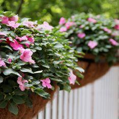 Fiori di vetro o Impatiens: la pianta ideale per balconi sempre colorati