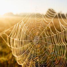 Spinnen im Herbst: Diese 5 Tipps helfen gegen die Invasion