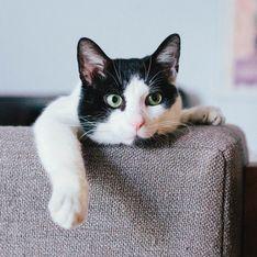 10 choses merveilleuses que seules les personnes qui ont un chat comprennent