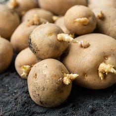 8 conseils pour empêcher les pommes de terre de germer