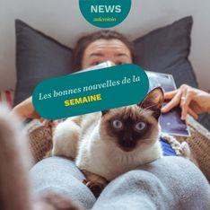 Les bonnes nouvelles de la semaine : de l'espoir contre le cancer et des chats chouchous