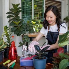 Les 4 plantes pour en finir avec l'humidité dans votre maison