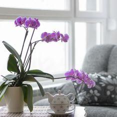 Cómo cuidar una orquídea: trucos y curiosidades que debes saber