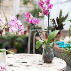 9 conseils malins pour chouchouter une orchidée