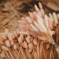 Fleurs séchées : comment faire sécher un bouquet ?