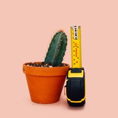 Le dimensioni del pene medie e... come ingrandirlo!