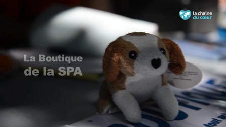Liste Des Refuges Spa Independants Et Associations Partout