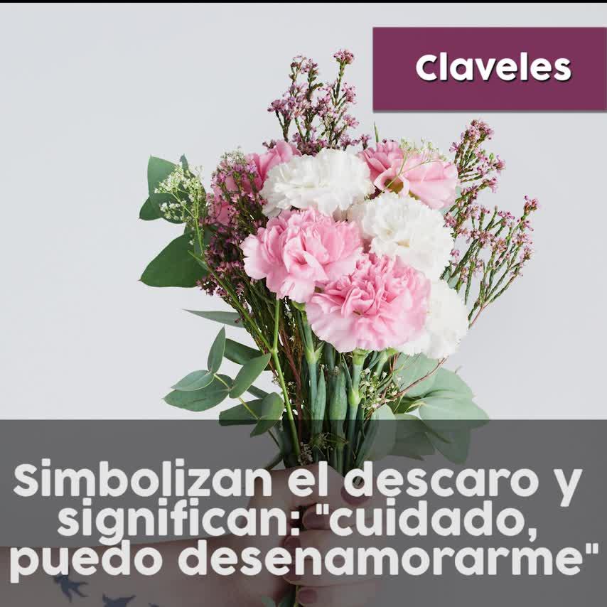 Significado Lenguaje Flores